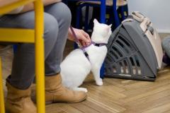 Do serca przytul psa, weź na kolana kota