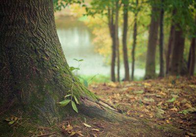 Zajęcia z edukacji ekologicznej